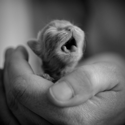 Kitten in the care of an animal shelter. Photo by Viktoria Haack Photography.