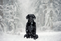 Alfred in the snow. Photo by Viktoria Haack Photography.